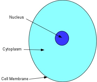 examples of cytoplasm in real life